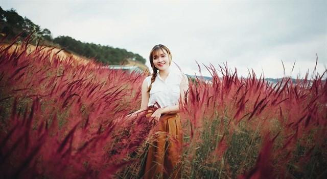 cỏ hồng