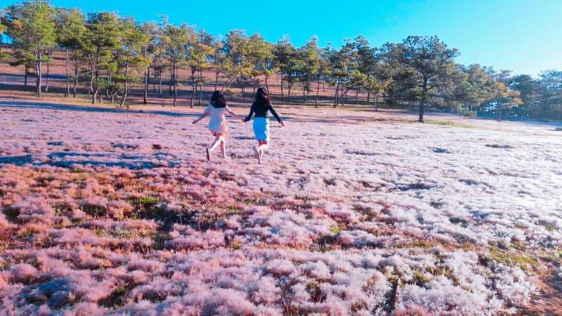 cỏ tuyết